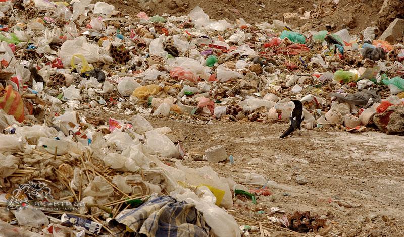 塑料袋对人类健康的危害极大